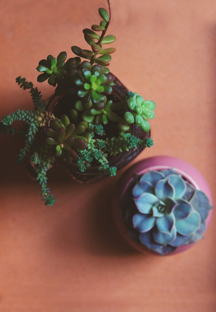 Two pot plants with green and purple leaves in a coral surface